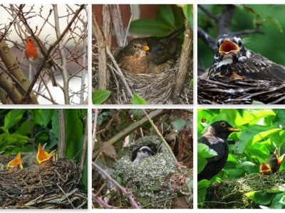 Birds Nest Collage