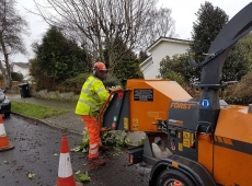 Ben Forst Woodchipper Tree Work