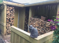 Timber Log Store Cat