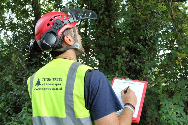 Accredited Tree Inspections