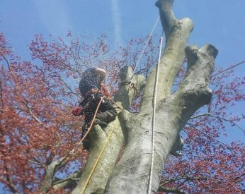 Tree Work Teign Trees