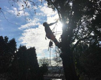 Brixham Tree Work Review