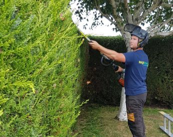 Hedge Trim