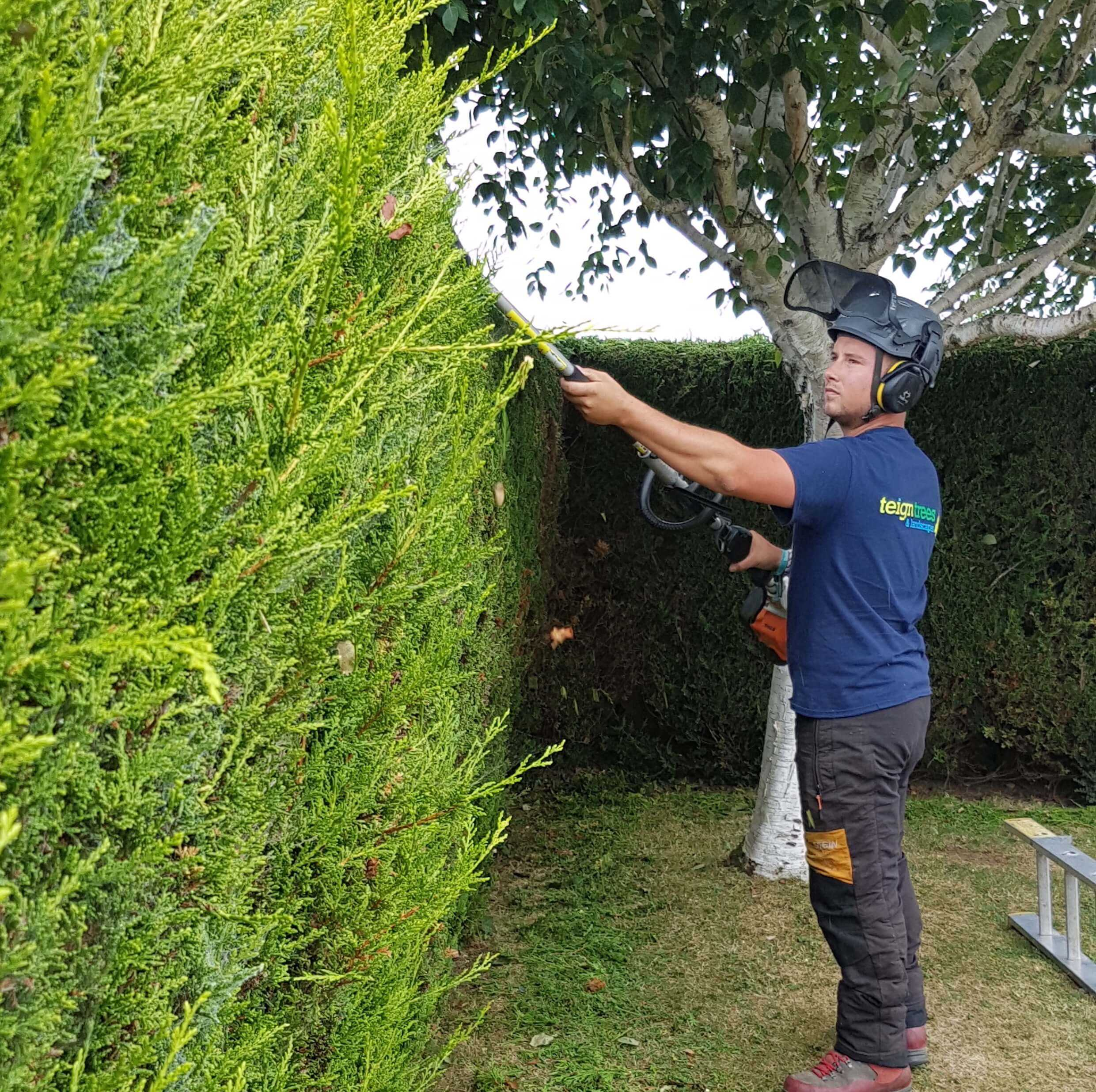 Uncategorized Hedge Trim hedge trimming services teign trees neat trouble free hedges need regular cutting to keep them tidy and manageable taming unruly is one of our specialties youll be amazed